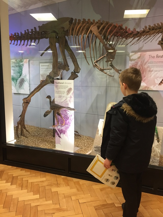 Child looking at dinosaur exhibit on university trip